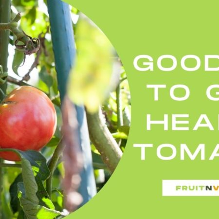 Feed to grow healthy tomatoes